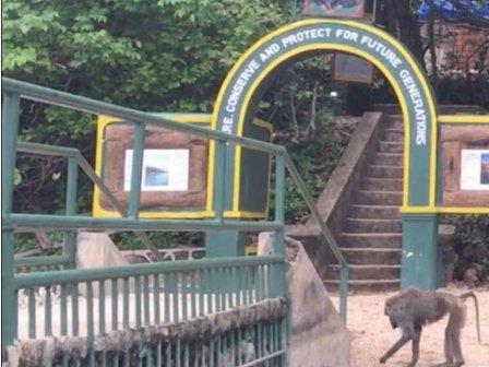 Una visita al Parco di Gombe non poteva mancare!