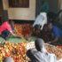 A Sanganigwa è tempo di raccolto: si inizia con i pomodori
