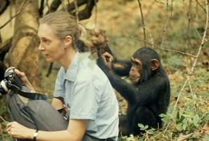 """L'Umanità ha compromesso il proprio futuro? Jane Goodall afferma """"Potete scommetterci che lo ha fatto"""""""