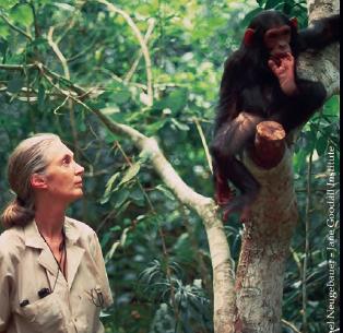 """""""Scimmie come noi"""" del JGI Italia su #Natura"""