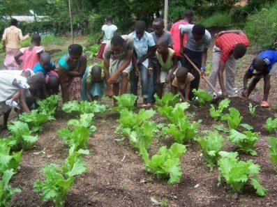 A Sanganigwa è il momento di preparare i raccolti