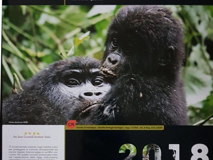 Calendario CITES, giugno 2018: JGI Italia per la tutela delle scimmie antropoforme