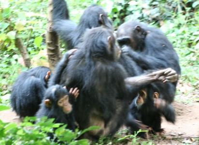 Aggiornamenti da Tchimpounga: Amazon e i suoi amici, esperti del gioco