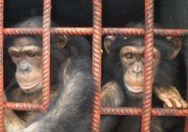 Stop ai test sugli animali per i prodotti cosmetici: Jane Goodall sostiene l'appello di Cruelty Free