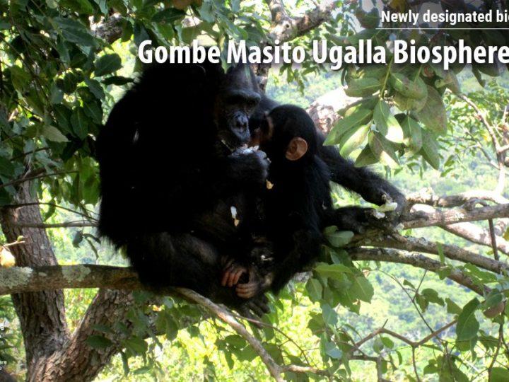 GOMBE è Riserva UNESCO
