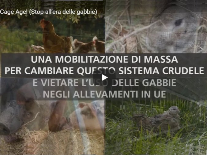"""End the Cage Age"" (Stop all'era delle gabbie)"