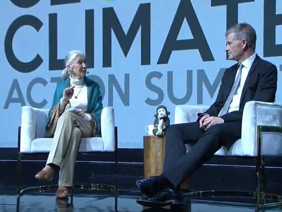"""La protezione delle foreste non può essere la """"soluzione dimenticata"""" per affrontare il cambiamento climatico"""