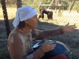 Il nostro scimpanzé Cozy rapito dalla musica
