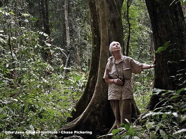 Fermare la deforestazione: conservazione centrata sulle comunità e corridoi per gli scimpanzé