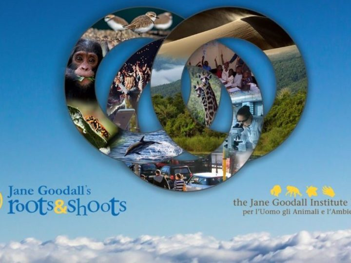 Sostenibile Futuro – Jane Goodall's Roots and Shoots Day 2019″: il programma della giornata