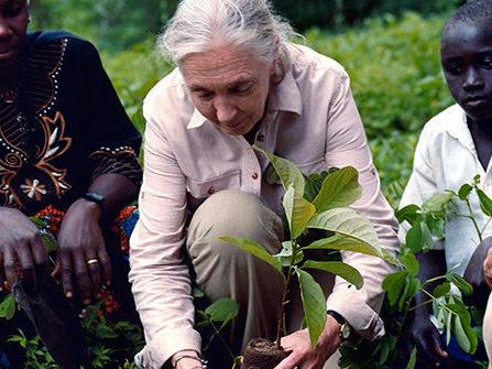 La voce di Jane Goodall sulle minacce alla biodiversità evidenziate nel Rapporto ONU