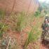 A Sanganigwa niente più erosione del suolo durante le piogge!