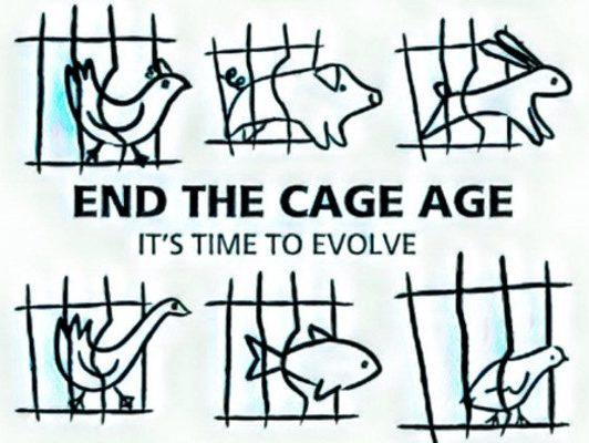 """Traguardo storico per gli animali: """"End the Cage Age"""" contro gli allevamenti in gabbia chiude con un milione e mezzo di firme"""
