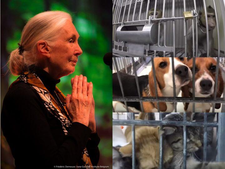 Jane Goodall: nessuna etica nei laboratori ripresi a telecamere nascoste, Amburgo