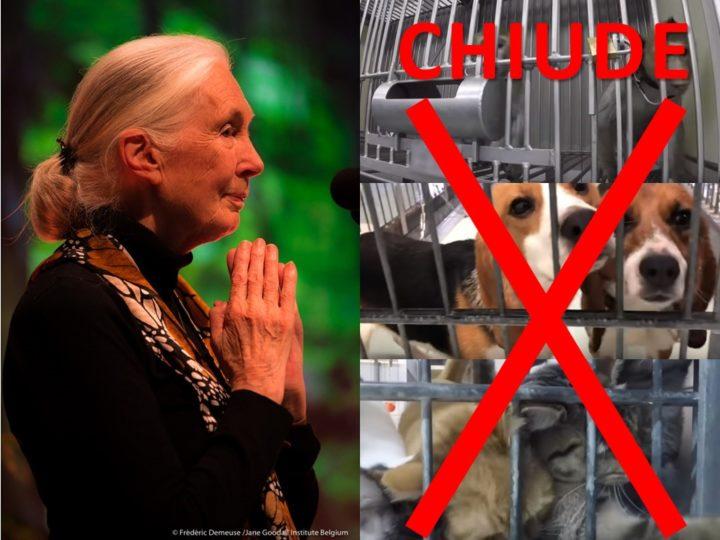Fermato il laboratorio LTP di Amburgo che tortura gli animali