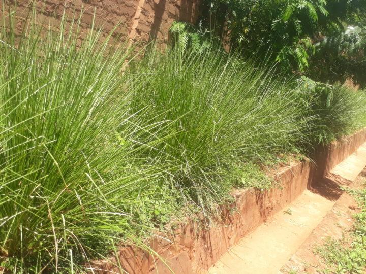 Il muro di cinta di Sanganigwa è finalmente sicuro: le piante contro l'erosione hanno attecchito