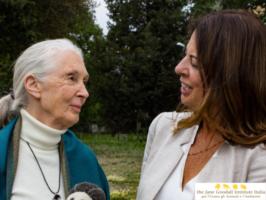 Gombe '60: Jane Goodall in arrivo in Italia