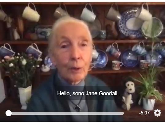 Jane Goodall: il suo messaggio di speranza in questi tempi di grande disagio
