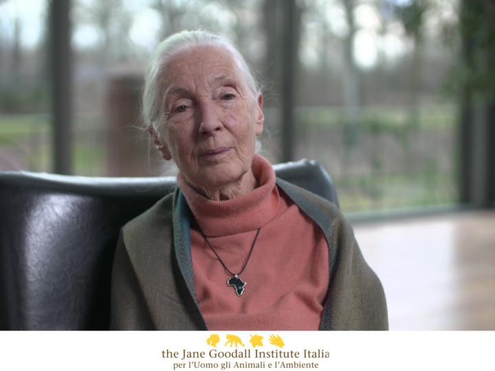 Jane Goodall sull'emergenza sanitaria: un problema per l'uomo, gli animali e l'ambiente
