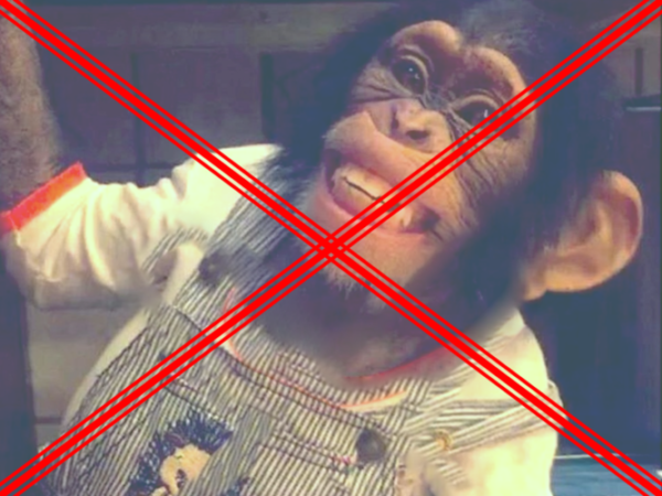 Ricordiamolo: MAI gli scimpanzé come animali da compagnia