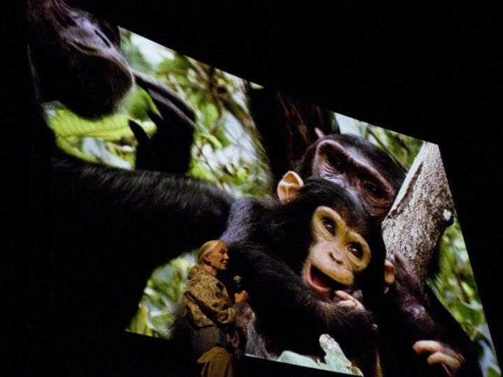 Jane Goodall: Cominciamo a pensare che questa esperienza deve servire a tutti: uomo, animali e ambiente. Perché siamo interdipendenti