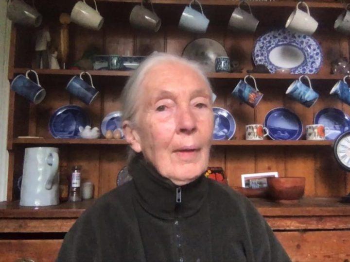 Jane Goodall per noi della Generazione Jane italiana