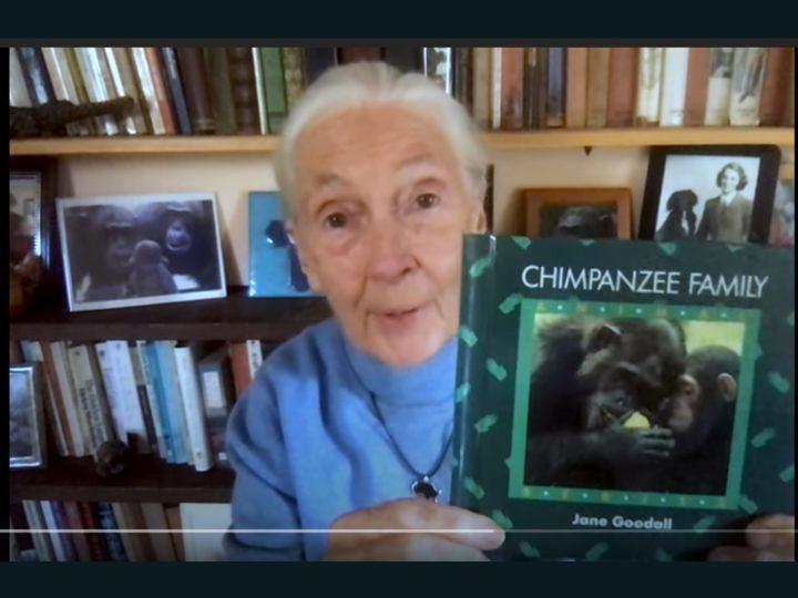 """#IoRestoaCasa: Jane Goodall legge per noi brani del suo libro """"Chimpanzee Family"""" e ci porta nelle loro vite"""