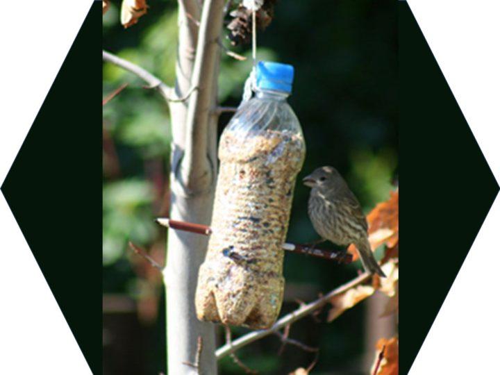 Da bottiglia di plastica a mangiatoia per uccelli