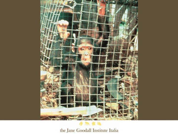 Onu: chiudere i mercati con animali selvatici