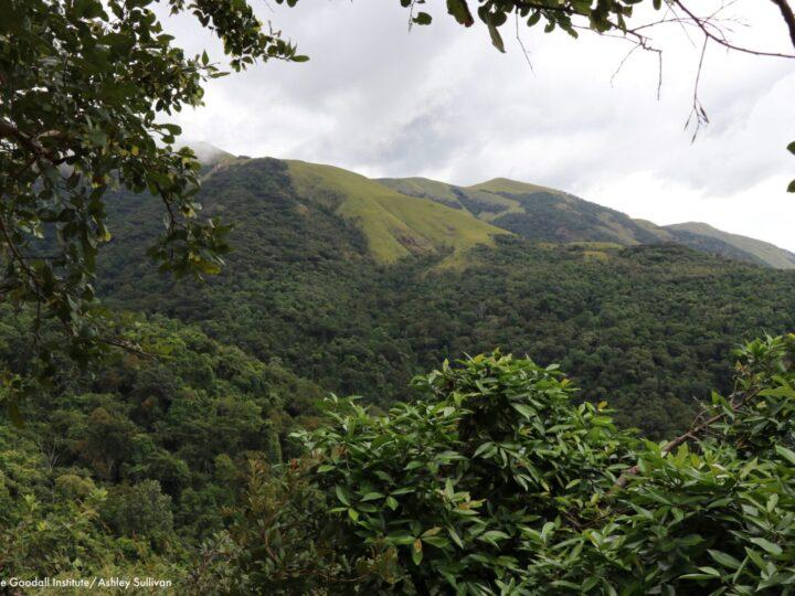 Al Vertice ONU sulla Biodiversità l'appello di più di 100 Associazioni per la tutela ambientale