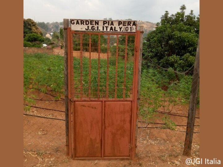 Aggiornamenti dagli orti biologici di Sanganigwa
