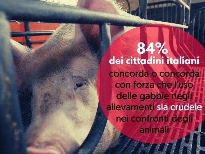 Sondaggio: per la maggioranza degli italiani è crudele l'uso delle gabbie negli allevamenti intensivi