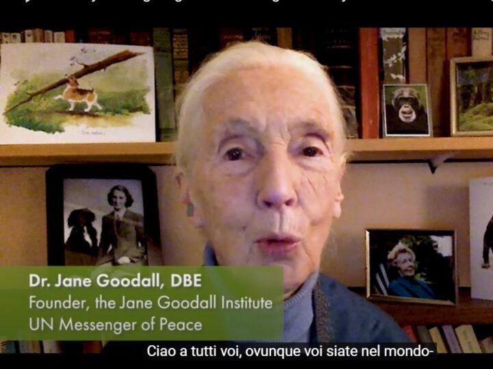 """""""Grazie per avermi dato forza:"""" gli auguri a tutti noi da parte di Jane Goodall"""