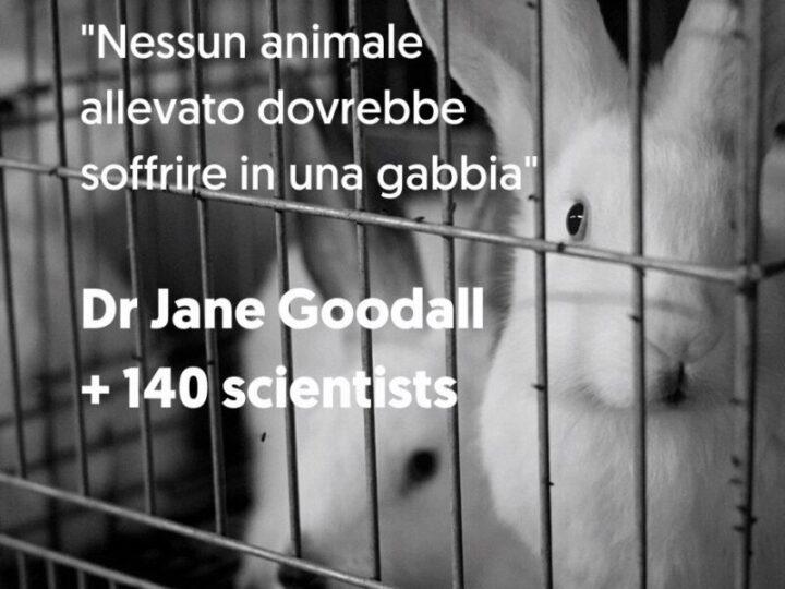 Oltre 140 scienziati per porre fine alle gabbie negli allevamenti