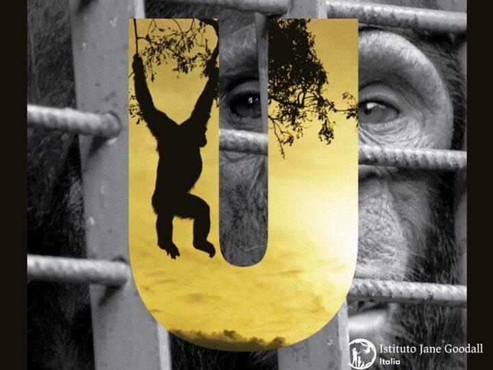 Vietato importare e detenere animali esotici: il Senato approva