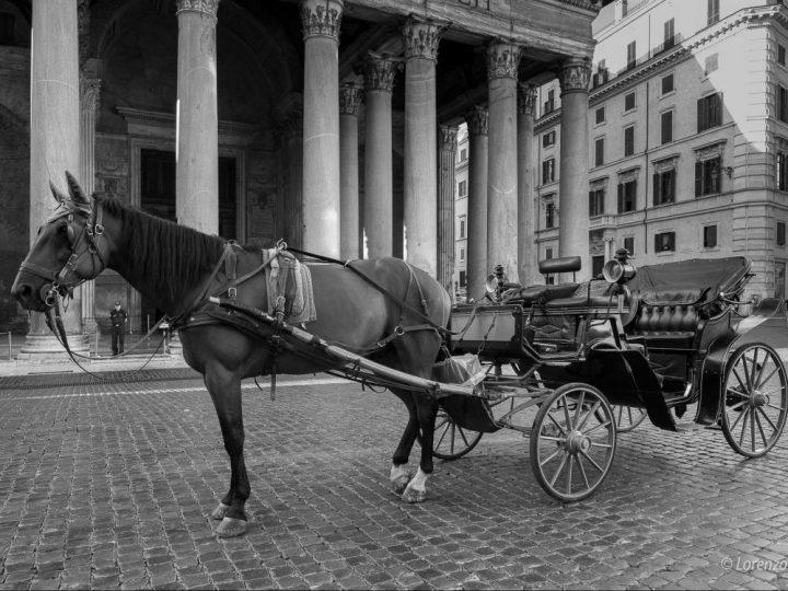 Cavalli che trascinano carrozzelle in centro: anche basta
