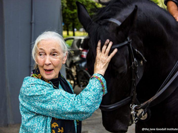 Love: Jane Goodall nel primo episodio della serie Netflix dedicata a Papa Francesco