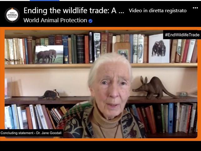 "Jane Goodall a ""Ending the Wildlife Trade"""
